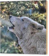 Arctic Wolf Song Wood Print by Skye Ryan-Evans