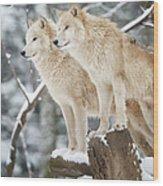 Arctic Wolves Pack In Wildlife, Winter Wood Print