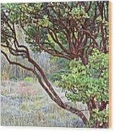 Arctostaphylos Hybrid Wood Print