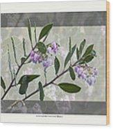 Arctostaphylos Manzanita 'monica' Wood Print