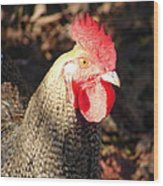 Are You Chicken Wood Print