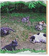 Argentina Cat Park Wood Print