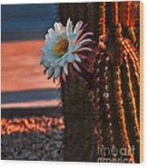 Argentine Cactus Wood Print