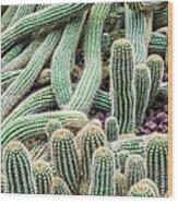 Argentine Giant Cactus Wood Print