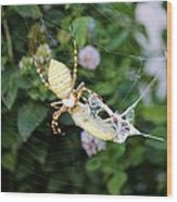 Argiope Spider Top Side Horizontal Wood Print