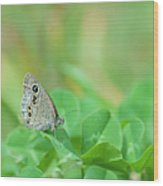Argus Rings Butterfly Wood Print
