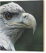 Aristocratic Bald Eagle Wood Print