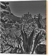 Arizona Bell Rock Valley N9 Wood Print