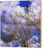 Arizona Mesa Through A Mesquite Tree Wood Print