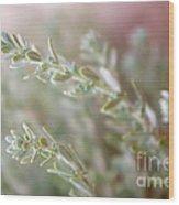Arizona Sage Wood Print
