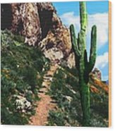 Arizona Saguaro Tonto National Monument Wood Print