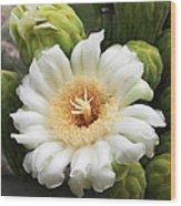 Arizona State Flower The Saguaro Blossom Wood Print