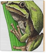 Arizona Tree Frog Wood Print