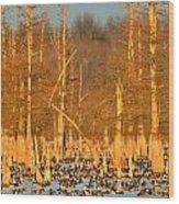 Arkansas Ducks Wood Print