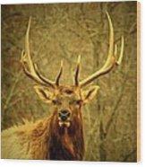 Arkansas Elk Wood Print