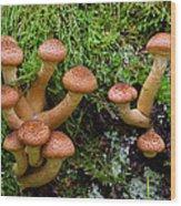 Armillariella Polymyces Wood Print