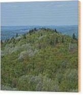 Aroostook State Park 6 Wood Print