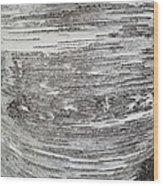 Around Birch Wood Print