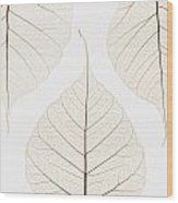 Arranged Leaves Wood Print