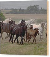 Arrington Ranch Herd - 2 Wood Print