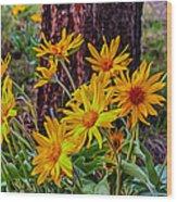 Arrowleaf Balsamroot Wood Print