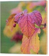 Arrowwood Leaf - Featured 3 Wood Print