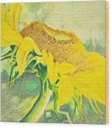 Sunflower Print Art For Sale Colored Pencil Floral Wood Print