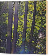 Art In The Woods Wood Print by Donald Torgerson
