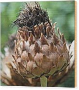 Artichoke Bloom Wood Print
