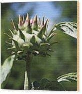 Artichoke Bud Wood Print