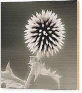Artistic Black And White Flower Wood Print