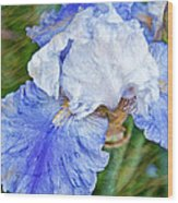 Artistic Japanese Iris Blue And White Flower Wood Print
