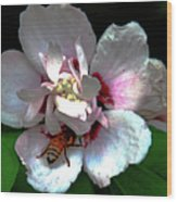 Artistic Shades Of Light And Pollinating Bee Wood Print