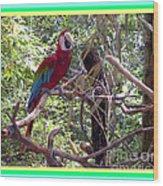 Artistic Wild Hawaiian Parrot Wood Print