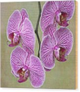 Artsy Phalaenopsis Orchids Wood Print