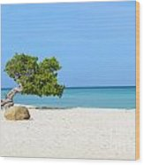 Aruba Divi Divi Tree Wood Print
