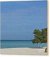 Aruba Divi Tree Wood Print