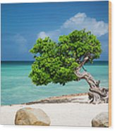 Aruba Tree Wood Print