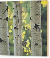 As Autumn Arrives  Wood Print