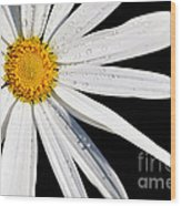 As Bright As A Daisy... Wood Print
