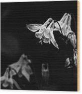 As Darkness Falls Wood Print