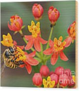 Asclepias Curassavica And Bee Wood Print