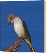 Ash-throated Flycatcher Wood Print