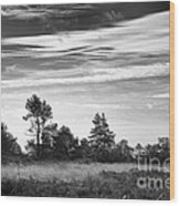 Ashdown Forest In Black And White Wood Print
