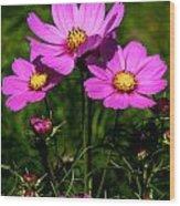 Asheville Wildflowers Wood Print
