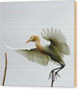 Asia Wood Print