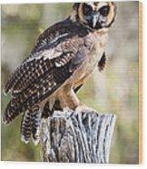 Asian Brown Wood Owl Wood Print