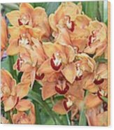 Asian Corsage Orchid Wood Print