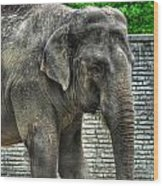 Asian Elephant  0a Wood Print