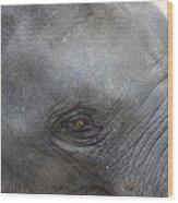 Asian Elephant Face Wood Print